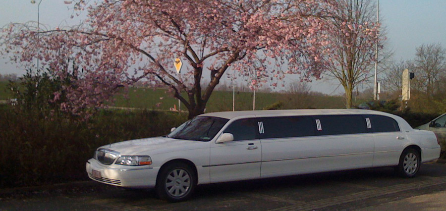 Lincoln White Limousine (Lincoln Limo)